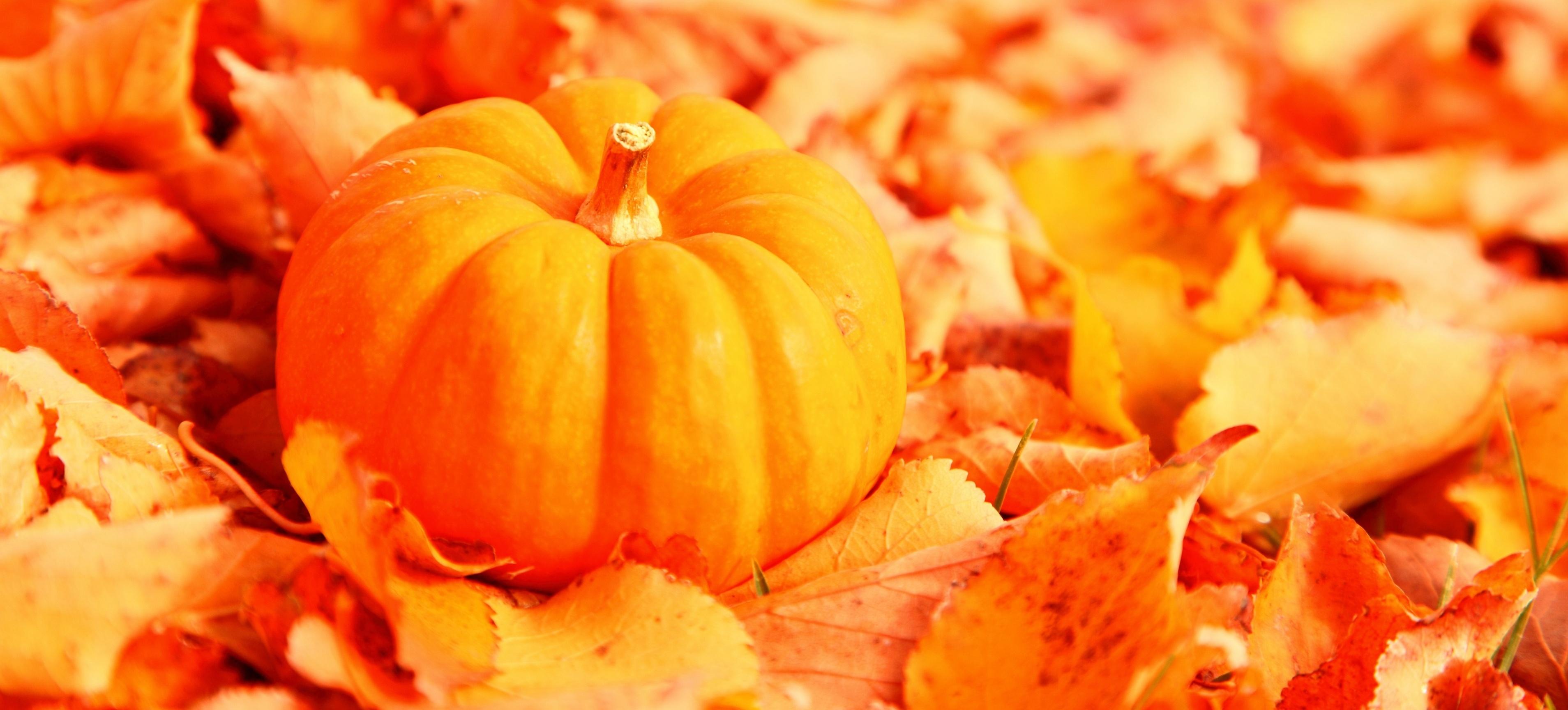 September 2012 absurd cinema - Fall wallpaper pumpkins ...